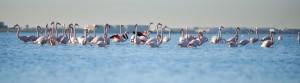 Flamants--résidence-Albatros