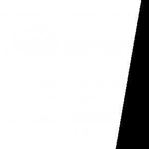 fond-b-albatros